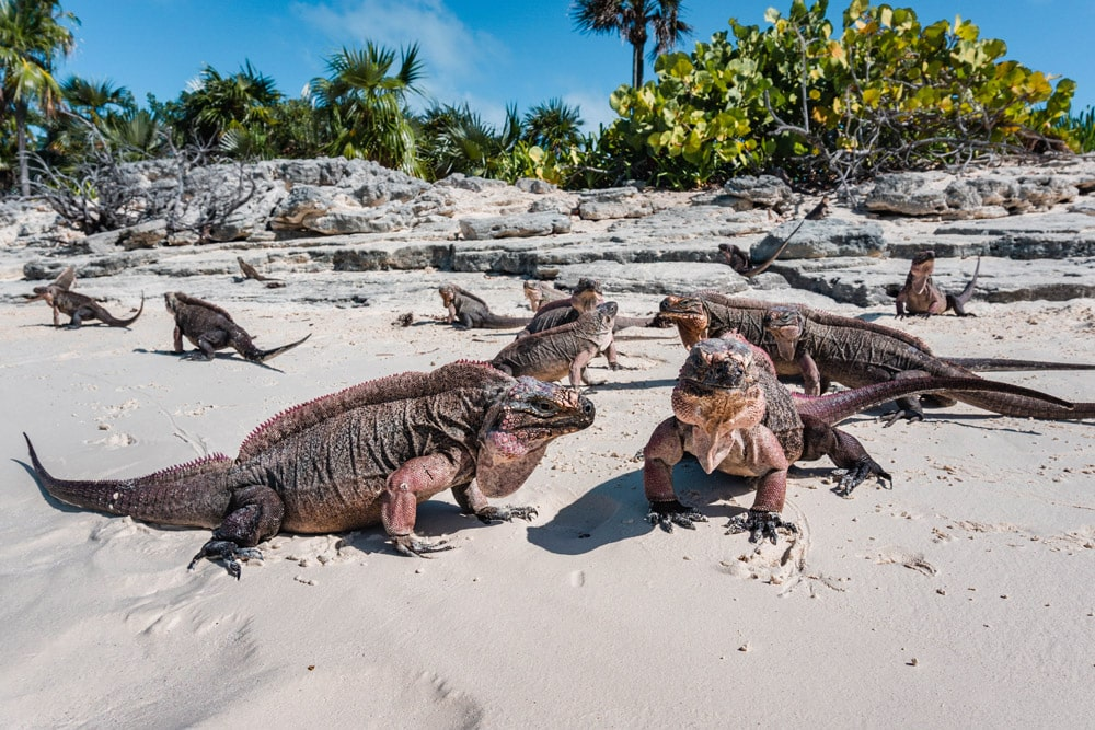 Exuma Water Sports: Swimming Pigs & Sightseeing Tours | Book